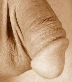 obrzezany penis
